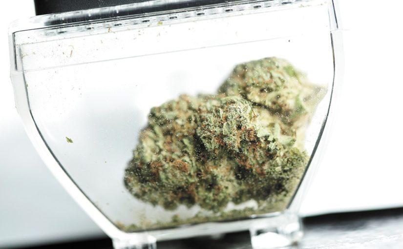 Study: Marijuana legalization in Washington and Colorado didn't increase crime
